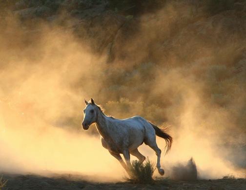 صور خيول متحركـه ..<<لبى بــس