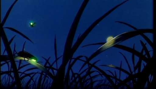 <i>Fireflies.</i>